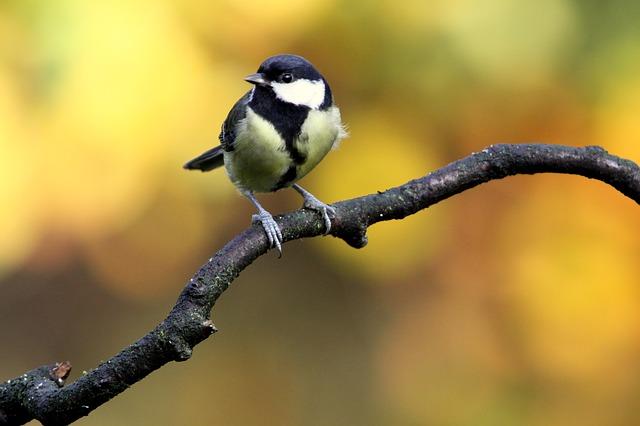Luonnolla on parantava ja eheyttävä vaikutus. Luonnon oma energiahoito tuo iloa, tasapainoa ja keveyttä.